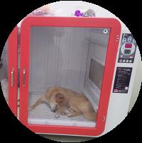 老犬は汚物で汚れやすく、また、新陳代謝も悪くなります。